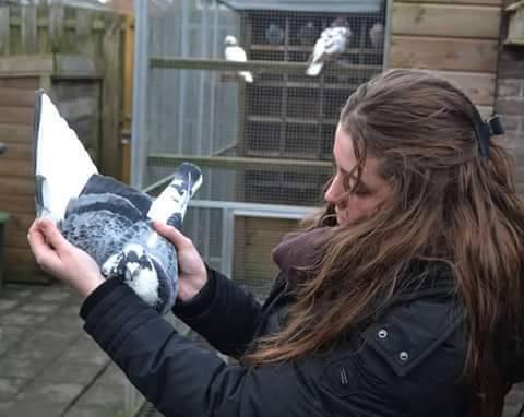 pigeons woman 117