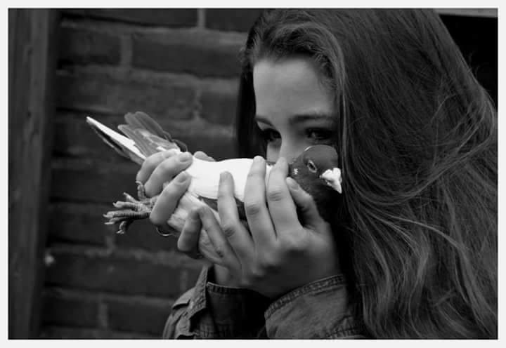 pigeons woman 144