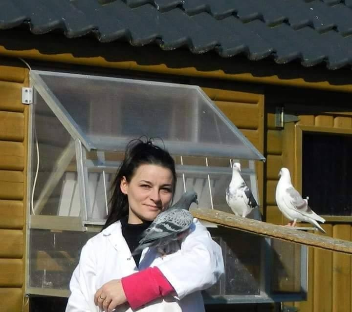 pigeons woman 181