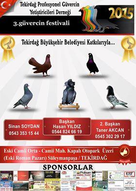 115 Kasım 2015 Tekirdağ Güvercin festivali