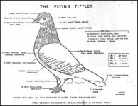 A-Standard-for-the-Flying-Tippler-2-03