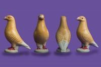 pigeon biblo 004