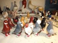 pigeon biblo 012
