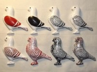 pigeon biblo 013