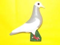 pigeon biblo 026