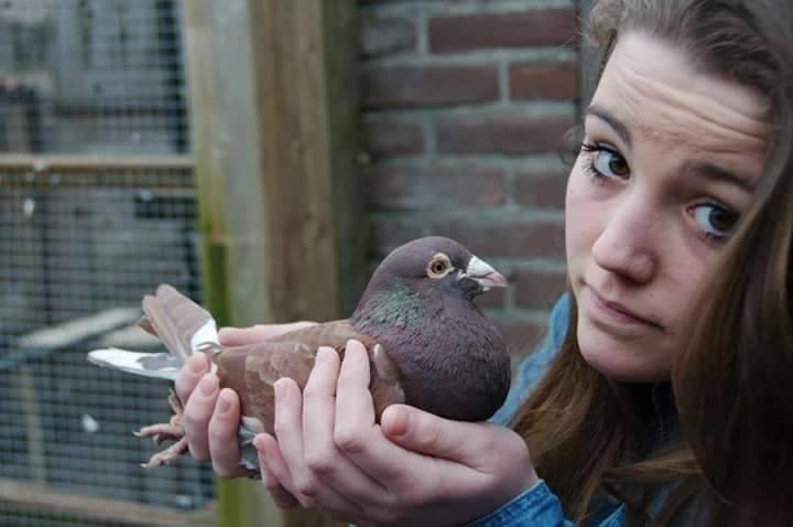 pigeons woman 014