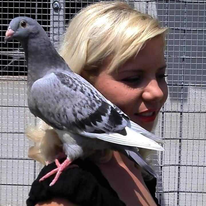 pigeons woman 024