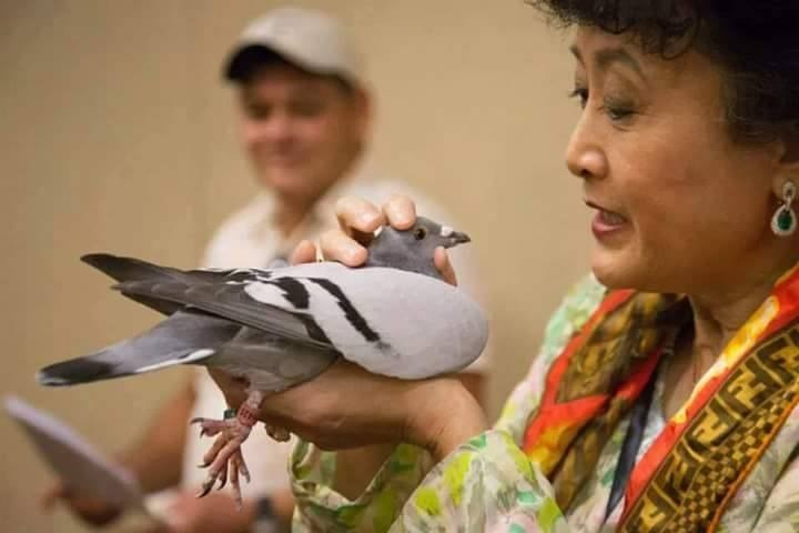 pigeons woman 048