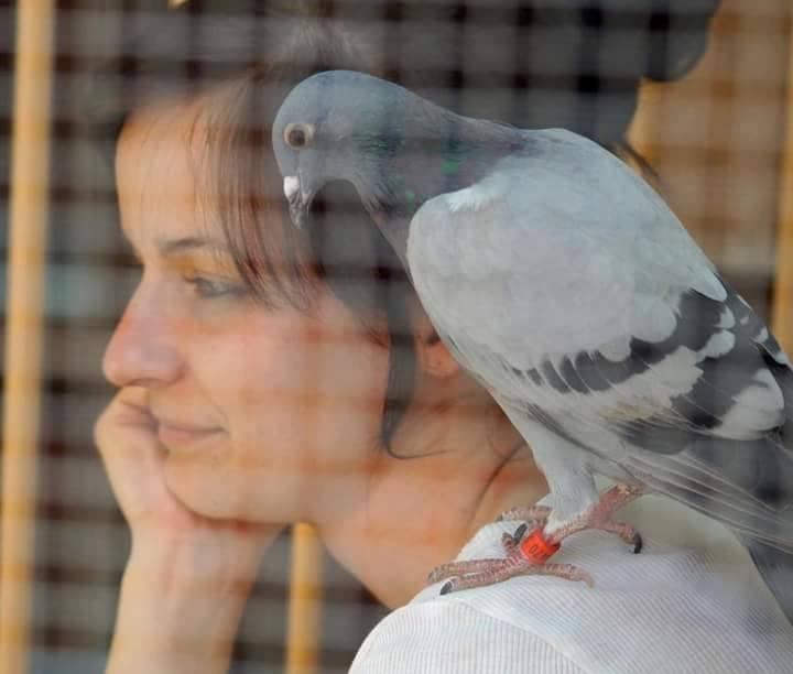 pigeons woman 082