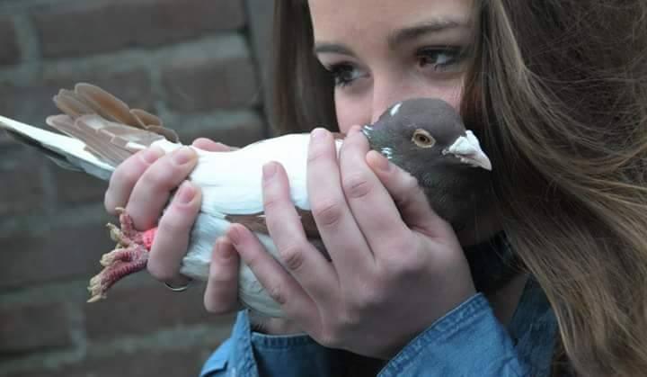 pigeons woman 133