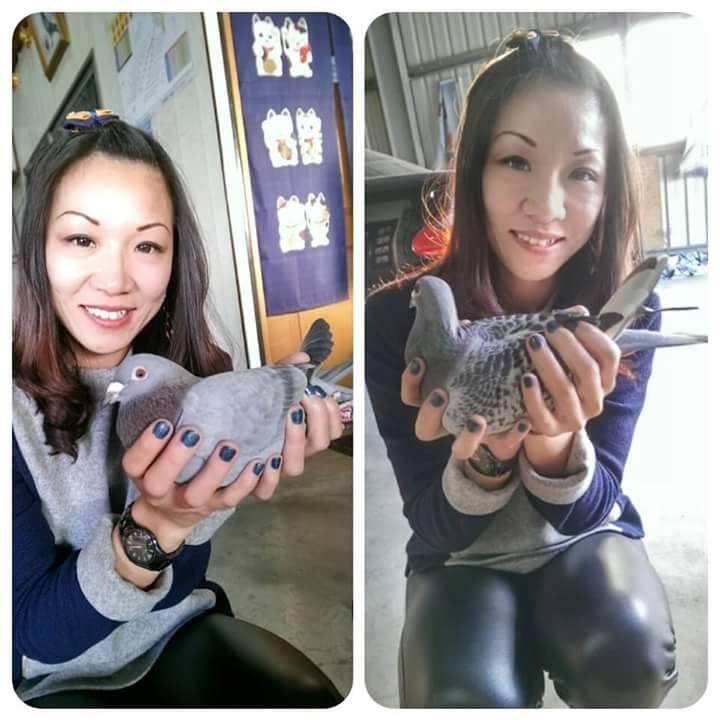 pigeons woman 135