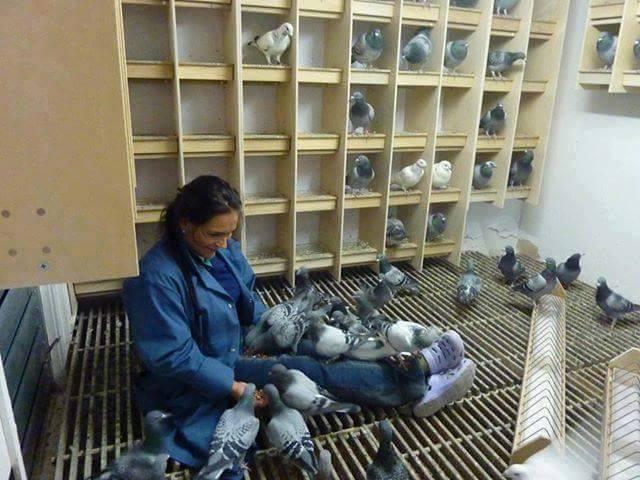 pigeons woman 156