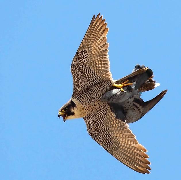 75832 621610349 - Kuş uçuranların dikkatine