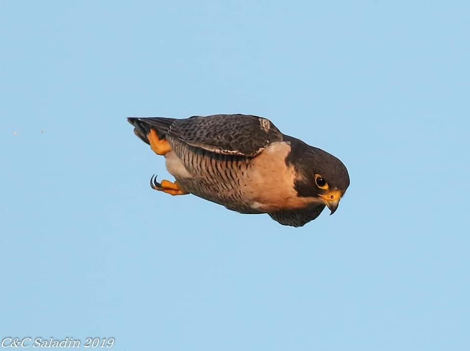 dfgdg - Kuş uçuranların dikkatine